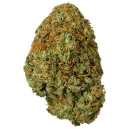 UK Blue Cheese Strain Cannabis Bud